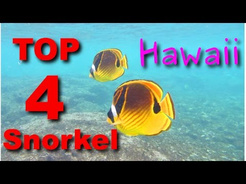 TOP 4 Places to SNORKEL in Hawaii