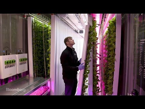 Eco-Friendly Farming in a Shipping Container