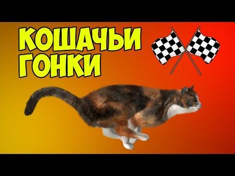 КОШАЧЬИ ГОНКИ   Team Drift Cats