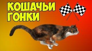 КОШАЧЬИ ГОНКИ | Team Drift Cats