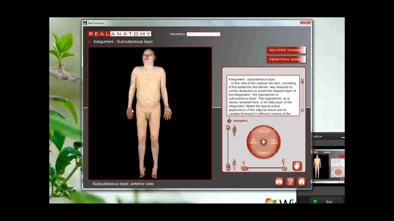 Real Anatomy Review.mp4 - YouTube