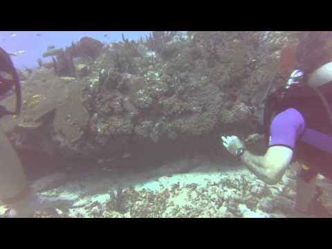 Diving Offshore Playa Del Carmen