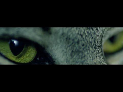 CEPASA - DELICIOUS (Official Video)