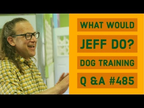 Stop dog barking | Dog rushes fence | What Would Jeff Do? Dog Training Q & A #485