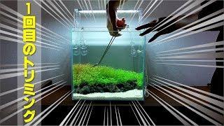 水槽セットから2週間ちょっと経過して 少しずつ水草が成長してきました♪...