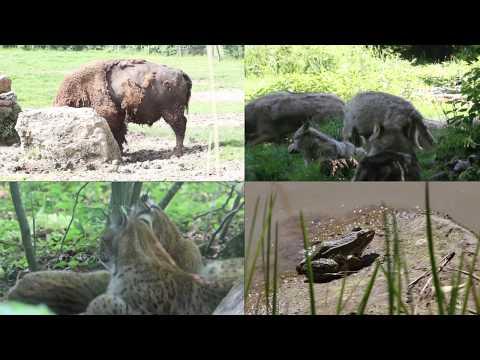 Séjour Ethologie et Gestion de la Faune 2017 - Master Ecophysiologie et Ethologie