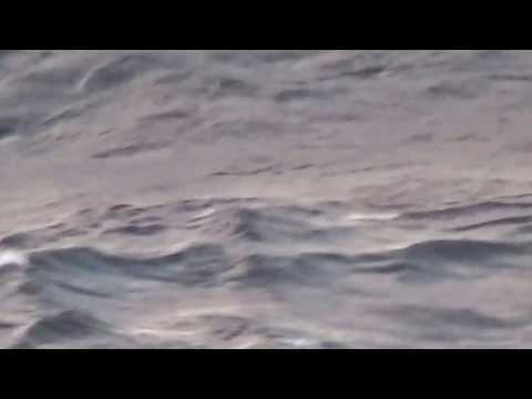 Laysan Albatross, North Pacific