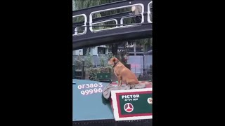 Doggo Seems To Enjoy Riding Around On A Boat