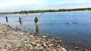 видео: Магадан.  Лов горбуша.