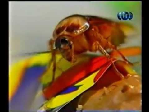 Почему от тараканов так трудно избавиться