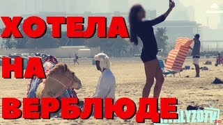 Пранк над девушкой! Прокатишься на моем верблюде? Vitalyzdtv на русском!