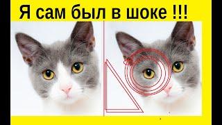 10 фактов о кошках После которых вы полюбите кошек сильнее