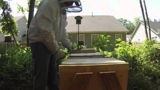5 5 2015 Top Bar Hive Inspection
