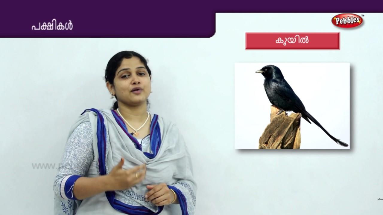 Learn Birds In Malayalam Pakshigal Preschool Educational Videos Toddlers Learning Videos Youtube