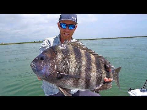 TROPHY Sheepshead Fishing In Cape May | Field Trips New Jersey