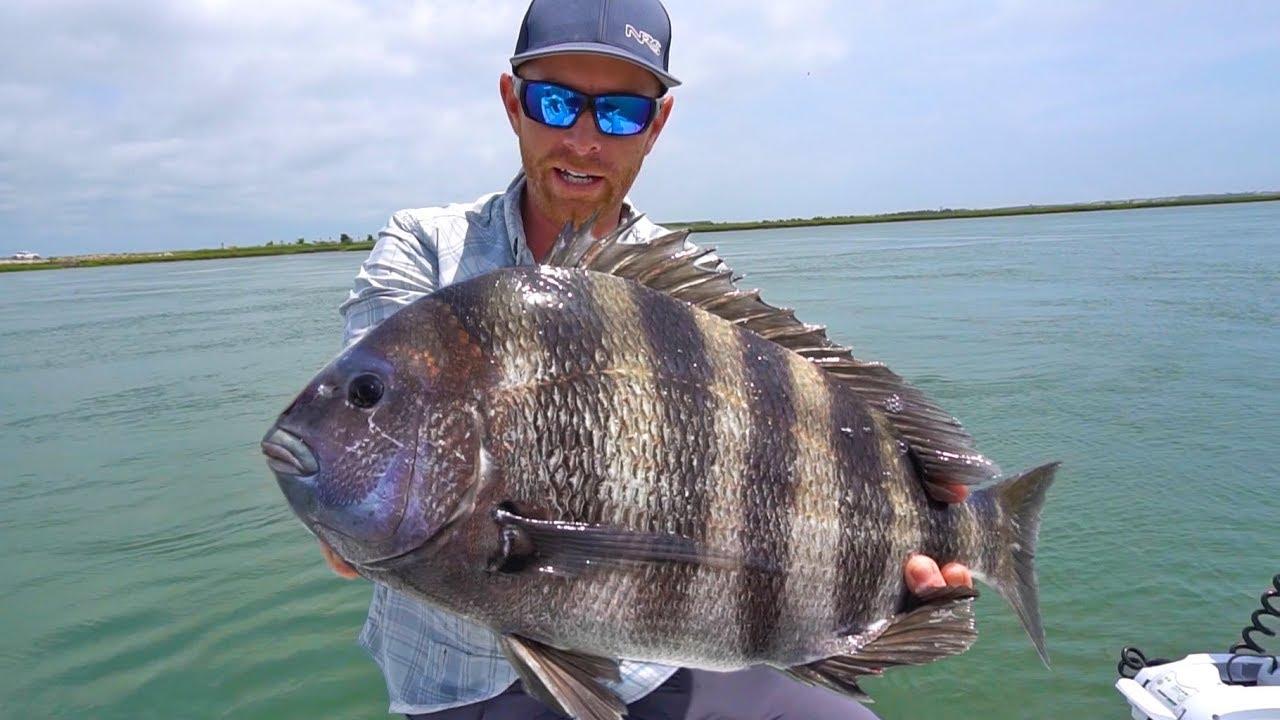 TROPHY Sheepshead Fishing in Cape May | Field Trips New ...Saltwater Sheepshead