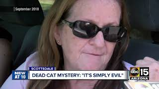 Man finds mutilated cat in Scottsdale, police believe human-caused
