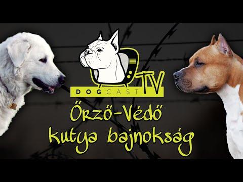 Melyik a jobb?  Őrző Védő kutya Bajnokság! - DogCast TV