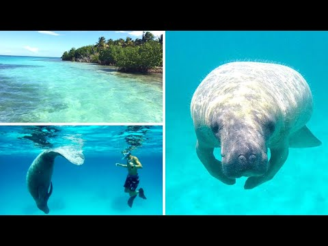 Volunteering with Manatees in Belize