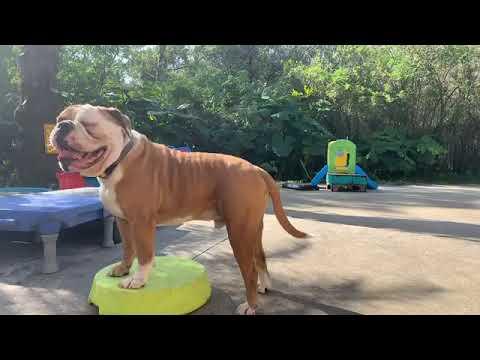 Usage of Dog Training Collar | P320 V3