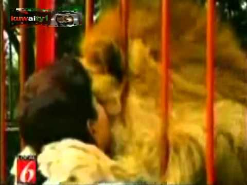474716a924ef7 انظر الى الاسد بعد ان رأى امرأه مقطع مؤثر جداً lion - YouTube