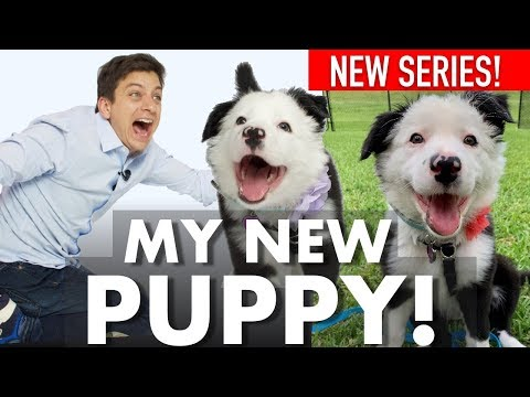 English Evan - How To Train Your Puppy!
