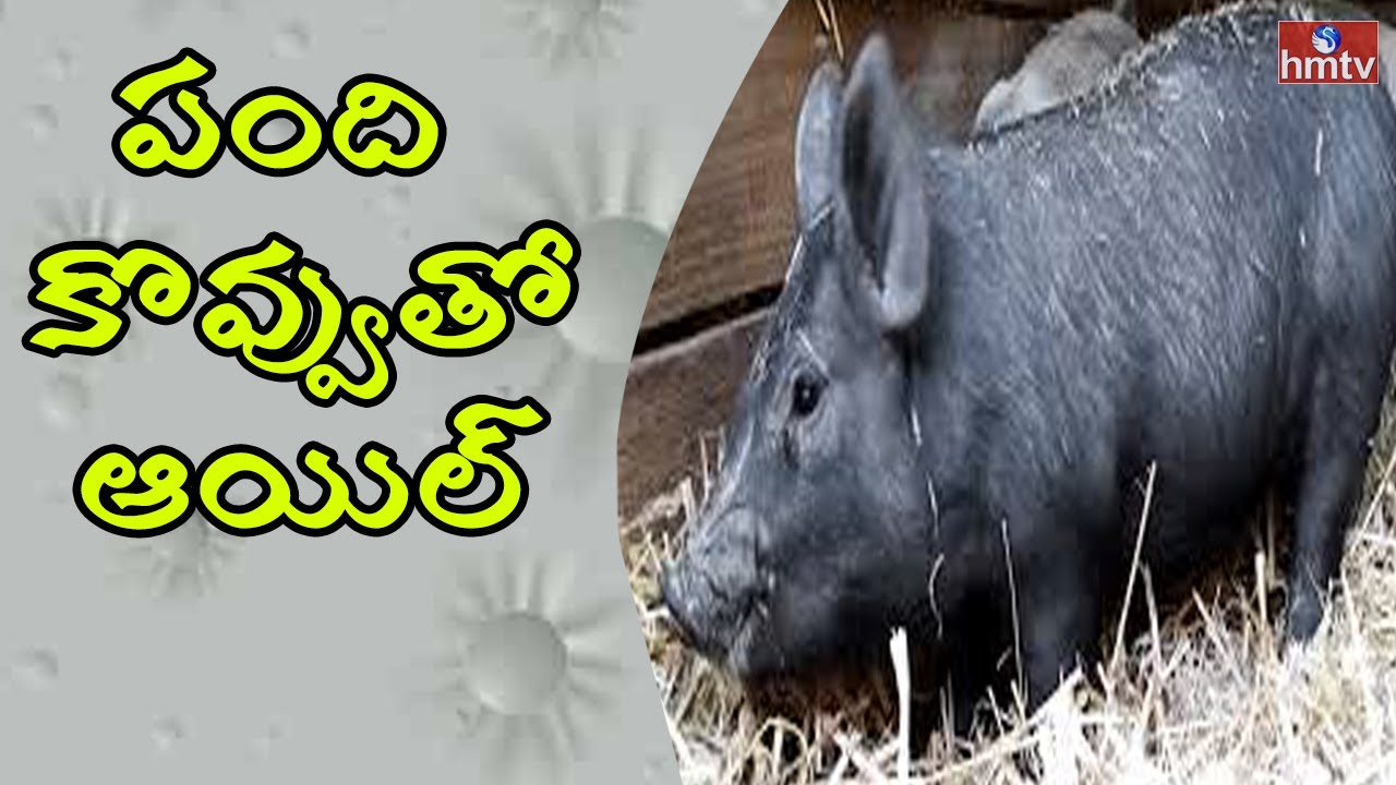 Oil Made From PIG Fat In Hyderabad | Adulterated Oil Mafia | HMTV