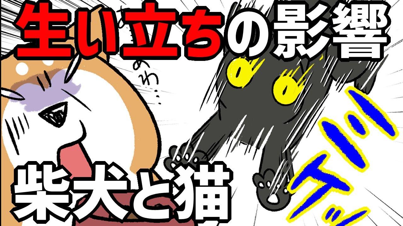 【犬猫まんが】柴犬と三毛猫の『生い立ちの影響』