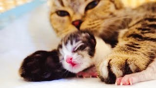 【李喜貓】猫咪生了两只宝宝本是开心的事,没想到结局却让女主人哭红了双眼
