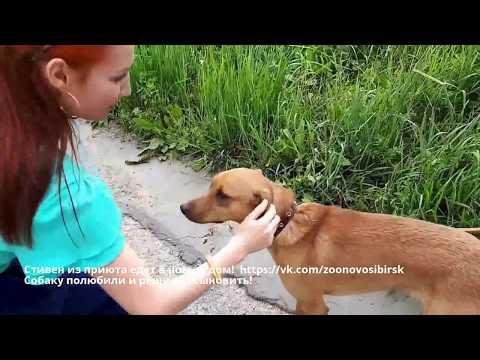 Вопрос: Как найти бездомному животному дом?
