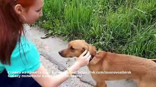 Счастливая собака из приюта едет в новый дом Радостно до слез когда животные находят хозяев!