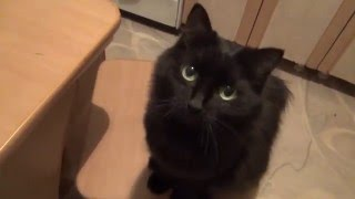 Кошка встает на задние лапки