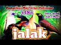 Masteran KEKINIAN Kombinasi Burung Jalak Gacor 5 in 1| Suara Jernih & Jeda