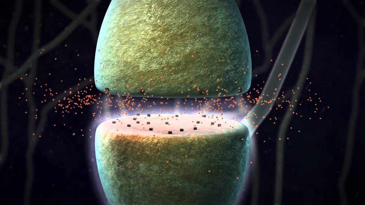 Chemical Synapse Animation - YouTube