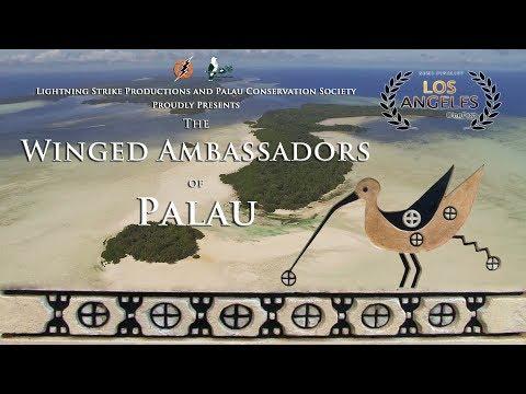 The Winged Ambassadors of Palau
