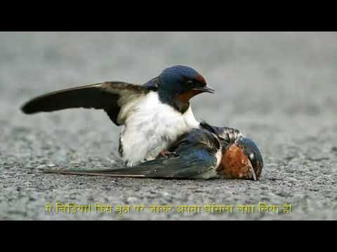 Kavana Birichhiya E Chiriya (Hindi Subtitles)