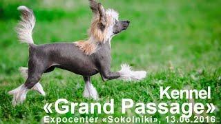 "Питомник китайской хохлатой ""Гранд Пассаж""/Chinese crested kennel ""Grand Passage"""
