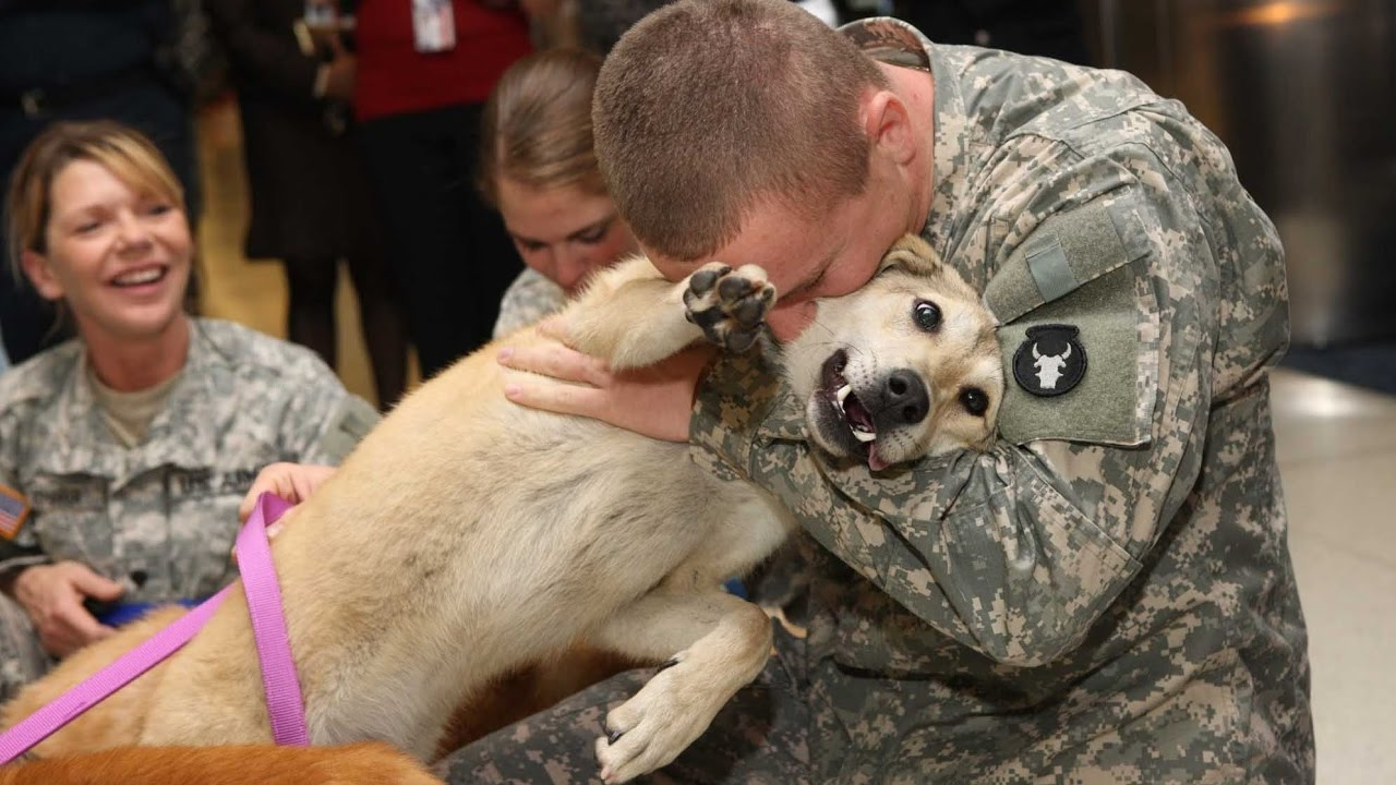 b0e3827142f Military Homecoming Surprises Compilation 2017 - YouTube