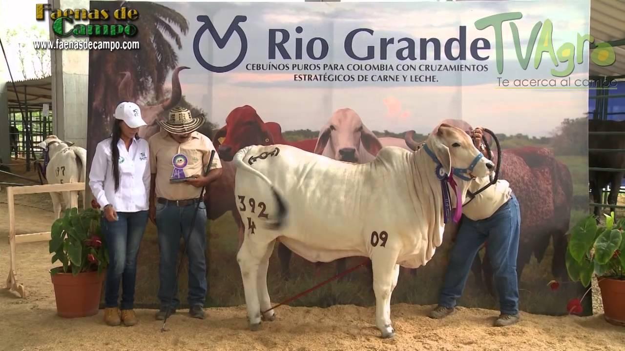 Expoganadera 2015- Rionegro, Antioquia - TvAgro por Juan Gonzalo Angel