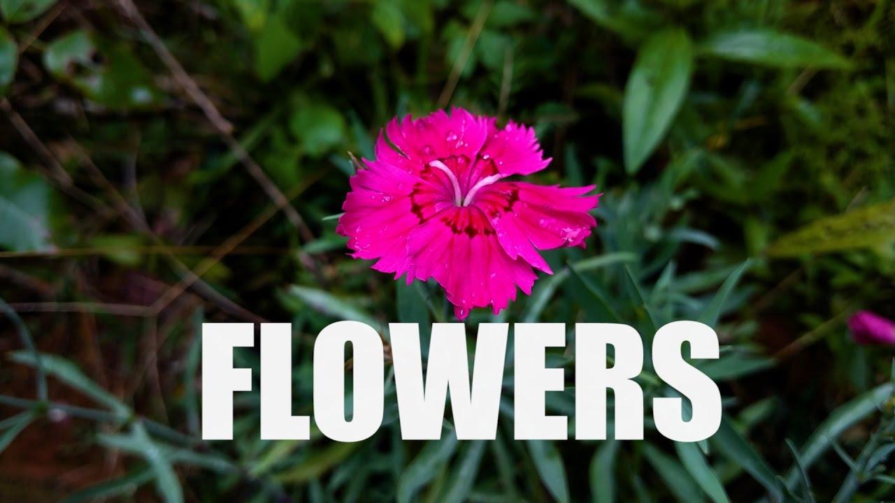 Flowers Of Kerala Youtube