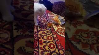 Кот уходит в запой:):)::)