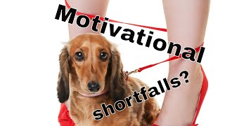 Staying motivated with your dog's training