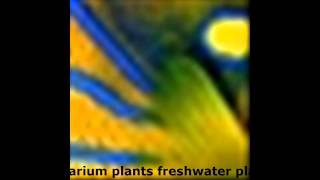Aquarium Plants Freshwater Plants Aquatic Plants Uk, Plants, Aquarium And Fish For Your Fish Tanks