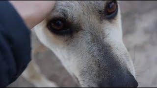 Замученный равнодушием пес Проша в Волгограде