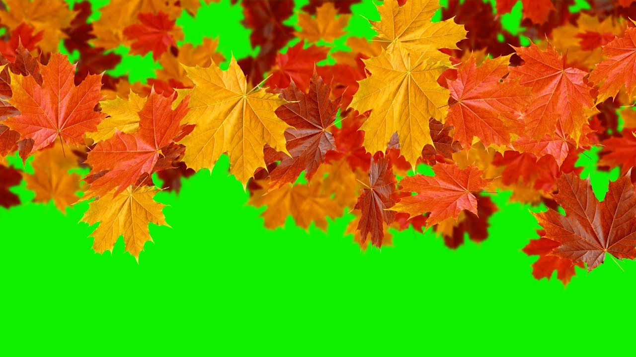 Green Screens Falling Leaves The Autumn Transitions Youtube