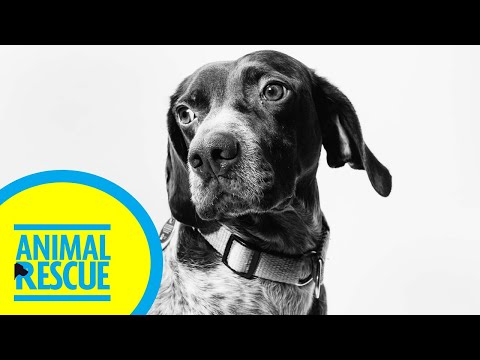 Animal Rescue - Season 2, Episode 17