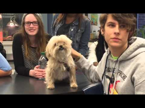 Dogs And Cats Visit BV East Veterinary Science Class