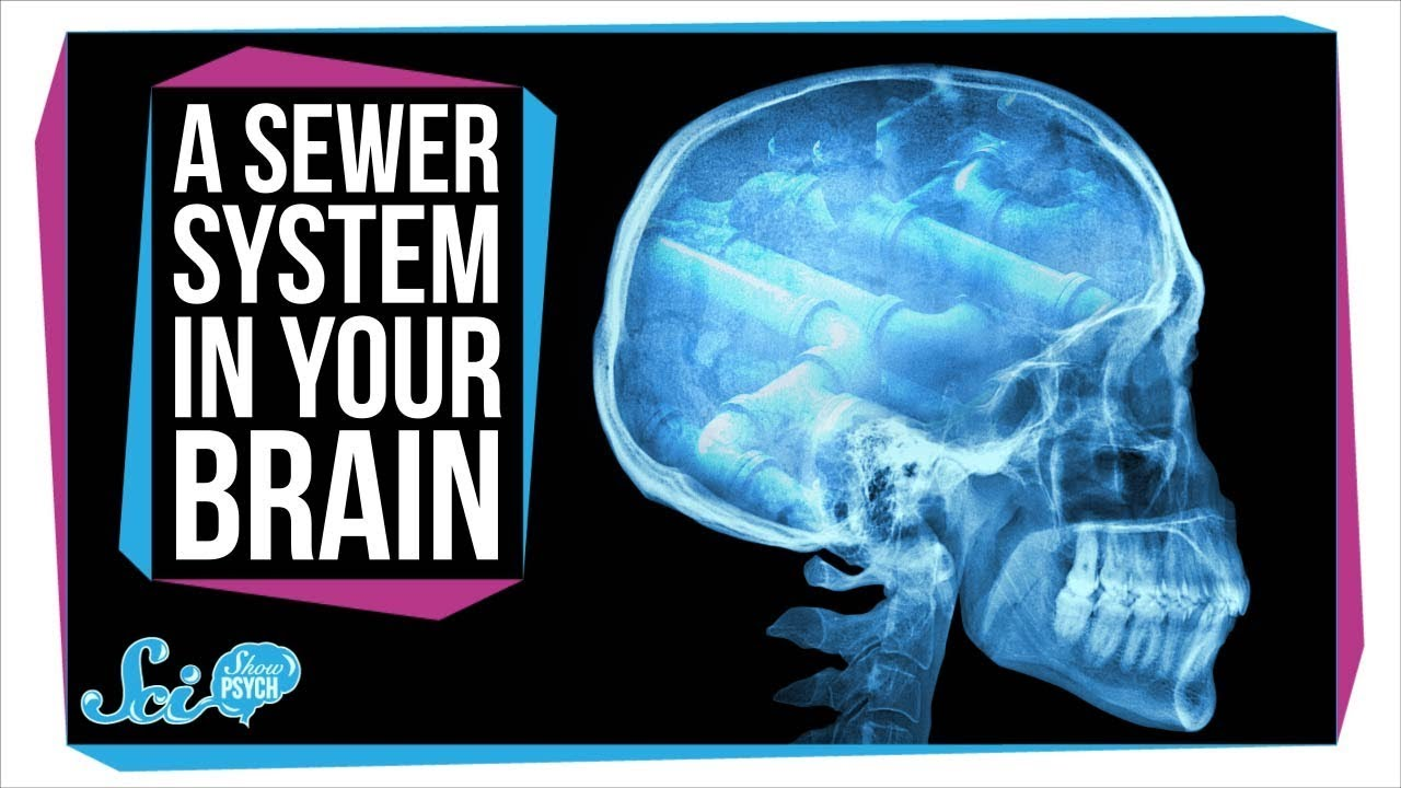 Surprise! Your Brain Has a Secret Sewer System