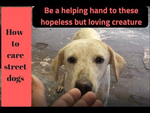 Pet care - How to Care Street dogs - Bhola Shola