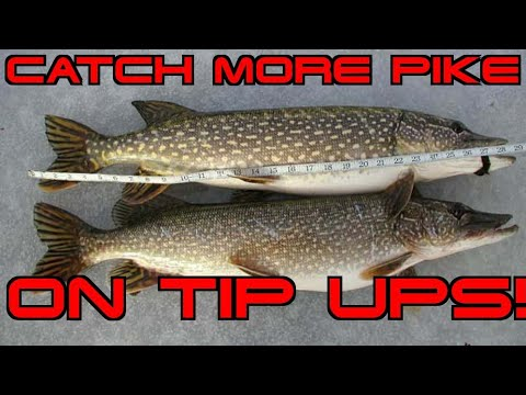 How To Rig A Tip Up For Pike!!!